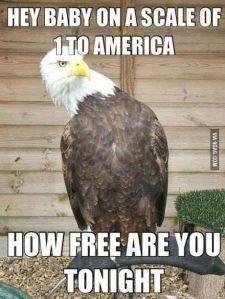 EagleFreedom